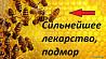 Подмор пчелиный и прополис в Кемерово