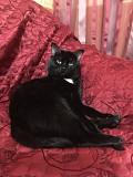 Кот приглашает на вязку кошечек!