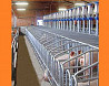 Оборудование для промышленного свиноводства на свинофермы